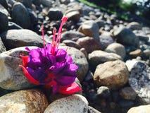 floral lizenzfreie stockbilder