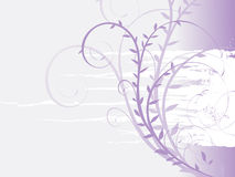 Floral. Background vector for your text Royalty Free Stock Images