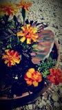 floral Photo libre de droits