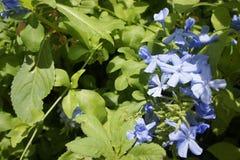 Floral Fotografia de Stock