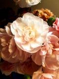 floral Στοκ φωτογραφίες με δικαίωμα ελεύθερης χρήσης