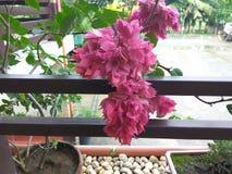 floral Foto de archivo libre de regalías