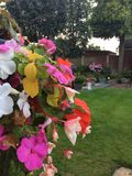floral Fotografia de Stock Royalty Free