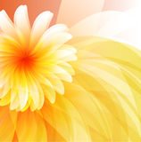 Floral abstract background. Eps 10 Royalty Free Stock Images