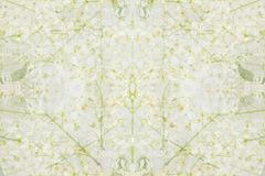 Floral abstract background. The pattern of bird cherry flowers. Royalty Free Stock Photography