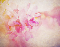 Floral abstract background. Royalty Free Stock Image