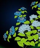 Floral abstract design Stock Photos