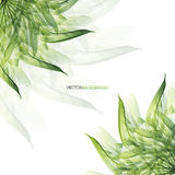 Floral abstract vector background with green leaves Stock Image