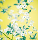 floral abstrait Images stock