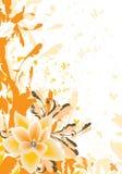 Floral alaranjado Imagens de Stock