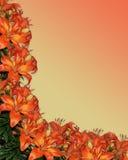 Floral alaranjado dos lírios da aguarela Imagens de Stock Royalty Free