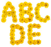 Floral alphabet. a, b, c, d, e. Floral alphabet. Part of an alphabet; letters a, b, c, d, e made of yellow flowers (Rudbeckia lanciata) isolated on white stock images