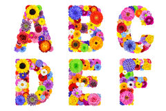 Floral Alphabet Isolated on White - Letters A, B, C, D, E, F royalty free stock photography
