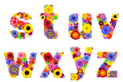 Floral Alphabet Isolated on White - Letters S, T, U, V, W, X, Y, Z Royalty Free Stock Image