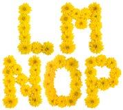 Floral alphabet. l, m, n, o, p. Stock Photo