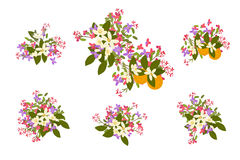Floral arabis and orange flowers retro vintage background Stock Image