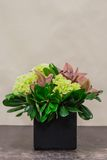 Floral arangement with cymbidium, Hydrangea and greenery Royalty Free Stock Photos