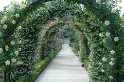 Floral Archway. Yellow roses and white jasmine archway-background Stock Images