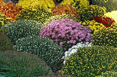 Floral arrangement Royalty Free Stock Photo