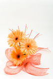 Floral arrangement. Bunch of orange gerberas with ribbon Royalty Free Stock Photography