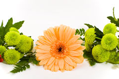 Floral arrangement. Floral composition with gerbera and green chrysanthemum Royalty Free Stock Image