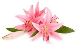 Free Floral Arrangement Royalty Free Stock Photos - 5342518