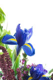 Floral Arrangement. Iris in a floral arrangement isolated on white Stock Photo