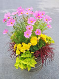 Floral arrangement with begonias and cosmos flowers. Beautiful floral arrangement with yellow begonias and pink cosmos flowers Royalty Free Stock Images