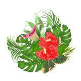 Floral arrangement bouquet with tropical flowers with beautiful lilies Cala and anthurium, palm,philodendron and ficus vintage ve. Ctor illustration editable Stock Photo