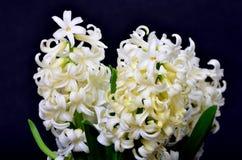 Floral arrangement Royalty Free Stock Photos