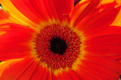 Floral Arrangement Macro Royalty Free Stock Photography