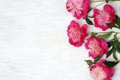 Floral arrangement of peonies Stock Photos