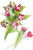 Floral arrangement with tulips Royalty Free Stock Images