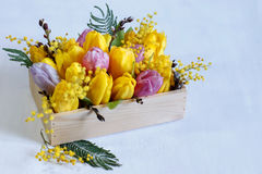 Floral arrangement of tulips, Mimosa and willow on white background. Floral arrangement of tulips, Mimosa and willow in a wooden box on a white background Stock Images