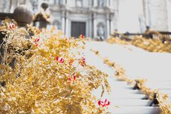 Floral arrangements for Flower Festival in Girona Royalty Free Stock Photos