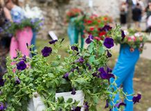 Floral arrangements for Flower Festival in Girona Royalty Free Stock Image