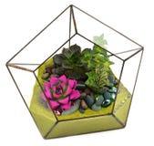 Floral arrangements Stock Photos