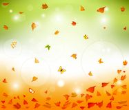 Floral autumn background  design Stock Image