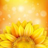 Floral autumn background. EPS 10 Stock Images