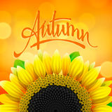 Floral autumn background with sunflower Stock Images