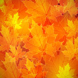 Floral autumn (fall) background with maple leaves Royalty Free Stock Images