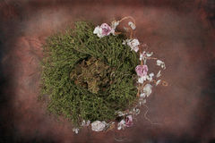 Floral Baby Bird Nest Fantasy Studio Set (Insert Isolated Client) Stock Photography