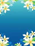 Floral Bacground Royalty Free Stock Images