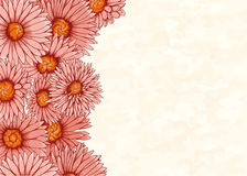 Floral bacground with hand drawn flowers Royalty Free Stock Image
