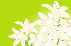 Floral back Stock Images