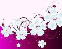 Floral background. For design use. Vector illustration Stock Photos