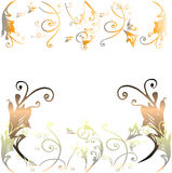 Floral background. Floral design on white background Stock Photos
