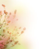 Floral Background. Beautiful Pastel Floral Border.Isolated on white royalty free illustration