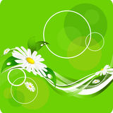 Floral background. Green  floral background with chamomiles and lines Royalty Free Stock Photo