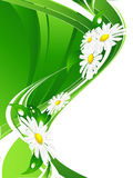 Floral background. Green floral background with chamomiles and lines Royalty Free Stock Image